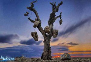 باغ سنگی